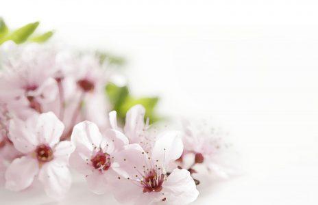 flower-back1406